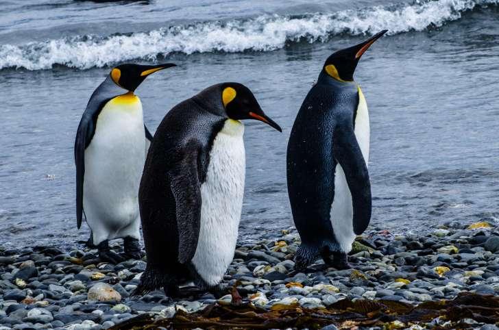 фото пингвинов с цветочками все части