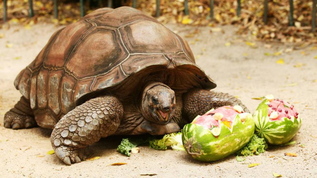 Картинки черепах человека