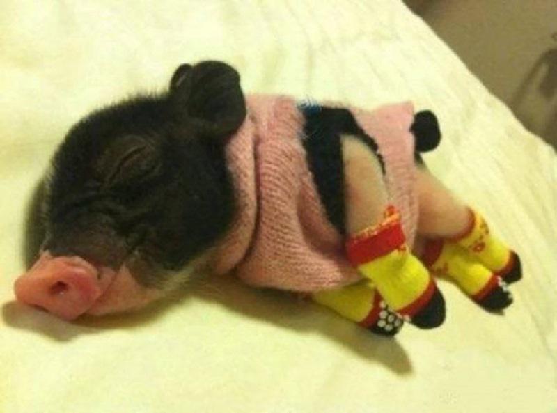 Эти очаровательные животные в теплых свитерах заставят вас улыбнуться