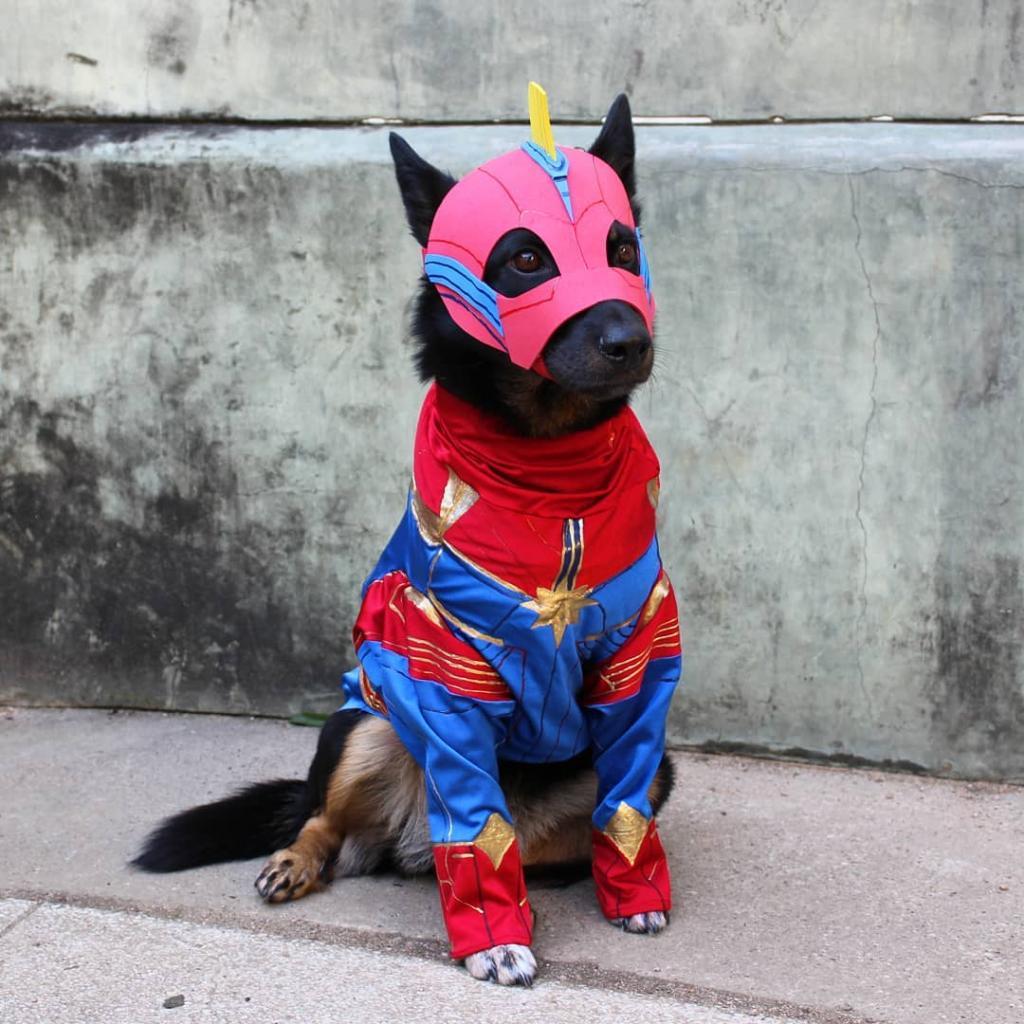 супергерои животные фото керамикаэто