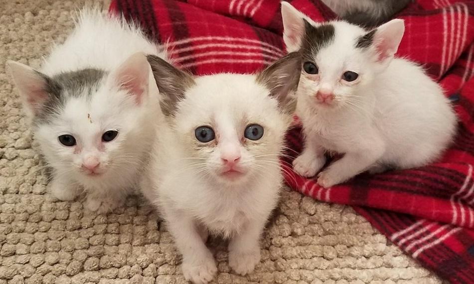 Кошка каждый день оставляла своих котят и куда-то уходила. Оказалось, ее вел материнский инстинкт