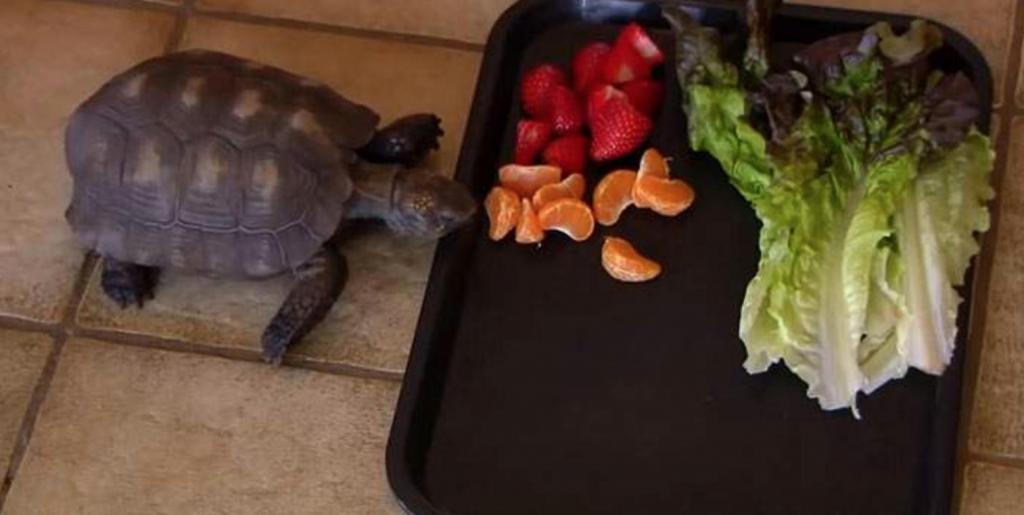Девушке подарили на день рождения черепаху, и домашний питомец прожил с ней полвека