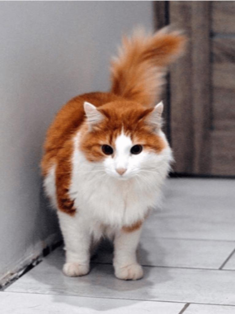 Кота вернули в приют из-за того, что он оказался чересчур ласковым. Теперь он живет в Голландии