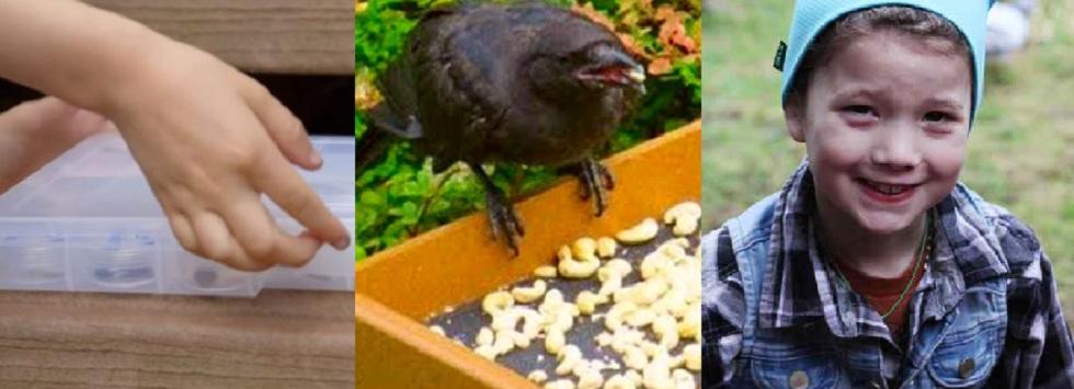 4-летняя девочка кормила ворон и подружилась с ними. Птицы осыпали свою благодетельницу щедрыми дарами
