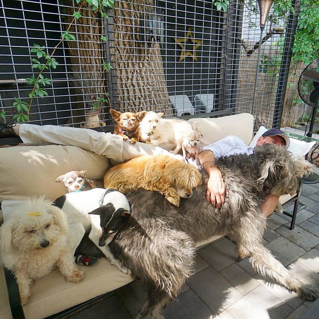 Мужчина просил в приюте показать ему самых некрасивых собак. Теперь у него дома целый зоопарк