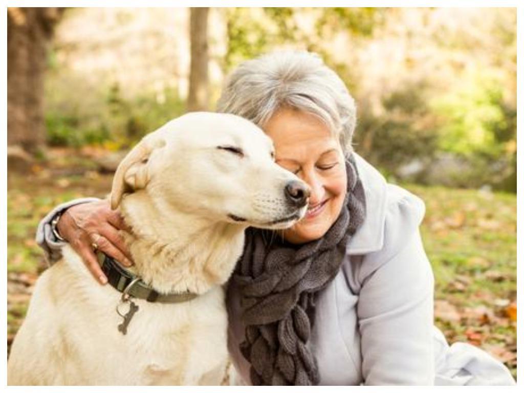 Один собачий год равен семи человеческим - утверждение совершенно не верное. Ветеринары рассказали, как определить возраст животного