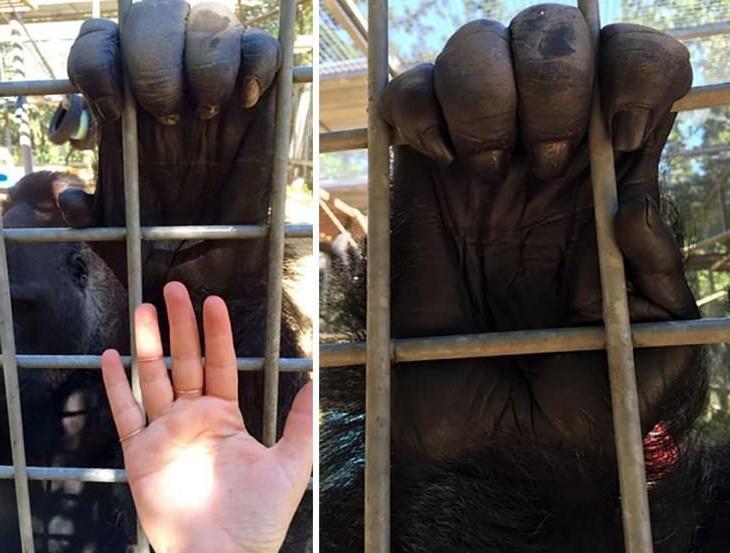 Орлиный коготь, рука гориллы, сердце кита: истинные размеры некоторых вещей могут удивить человека