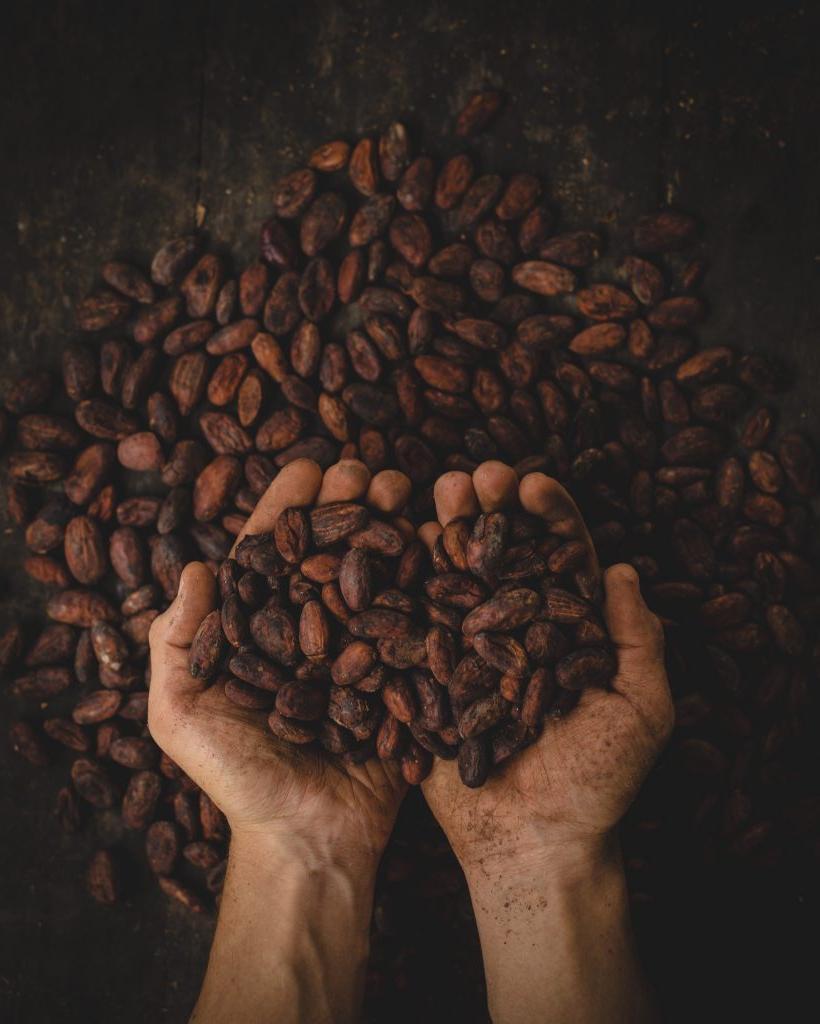 Ешьте спокойно: ежедневное употребление шоколада улучшает работу мозга – новые исследования
