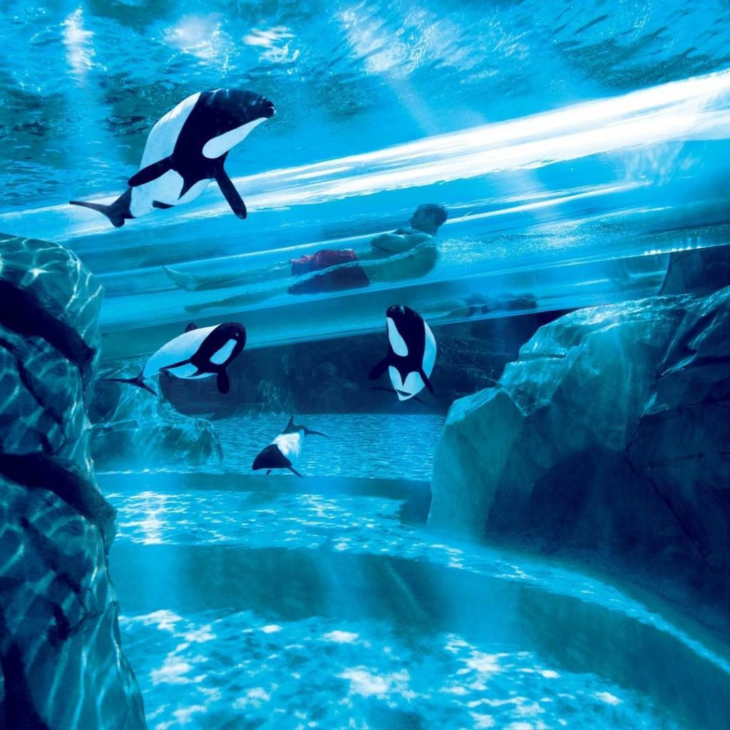 70 км/ч на тобогганах или полет через туннель с акулами: 7 самых крутых аквапарков в мире
