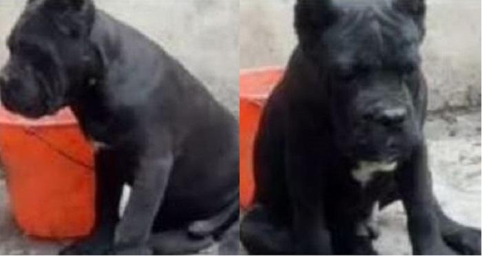 Заводчик решил продать собак, но вместо покупателей к нему домой пришли полицейские