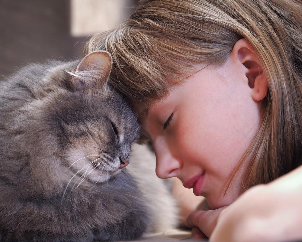 Картинки человек с котом