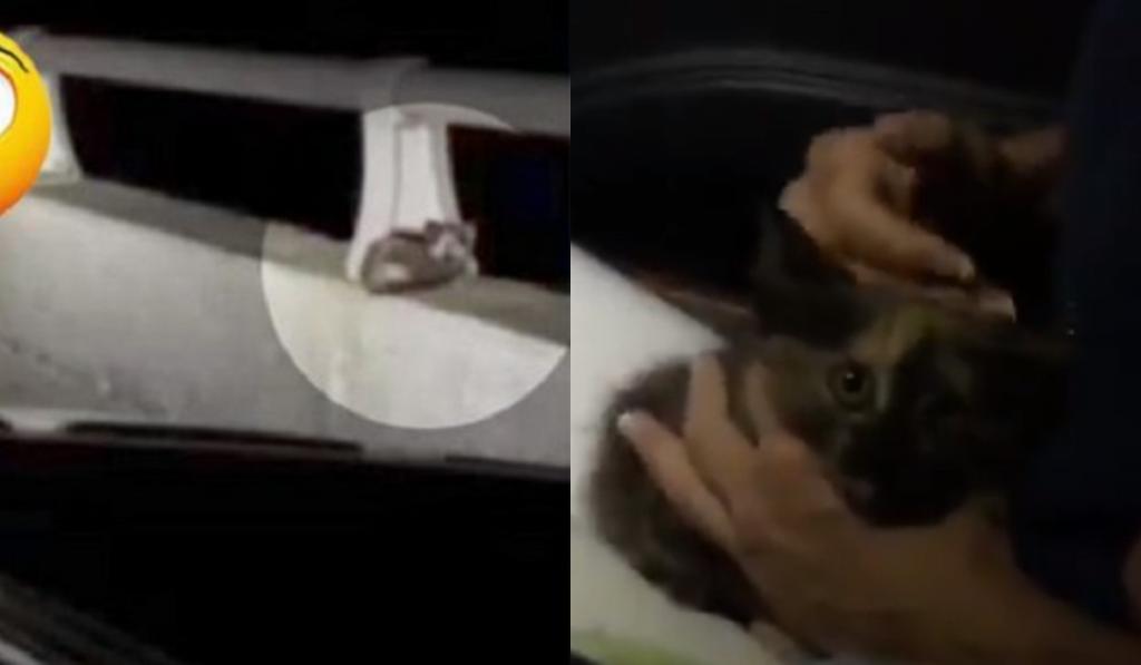 Проезжая по мосту, супруги заметили на краю перил котенка. Они решили спасти животное
