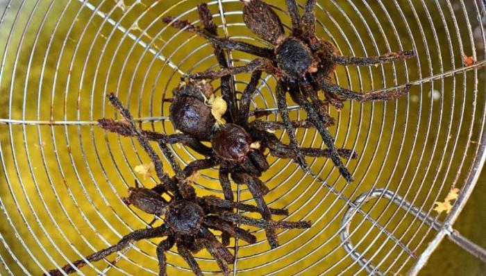 как приготовить паука