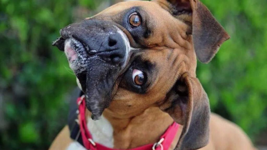 Самые смешные собаки мира картинки