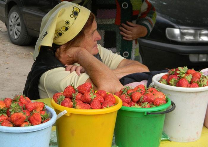 пожилой мужчина продает ягоды фото картинки обучение проходило