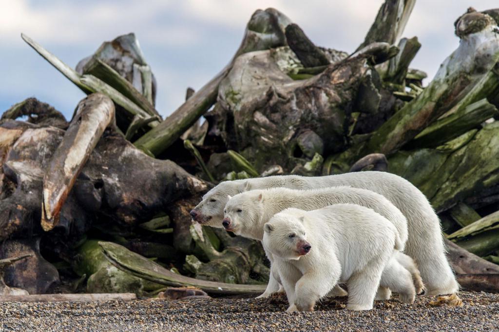 Плывущий медведь и морской дракон: лучшие фотографии BigPicture Natural World 2019