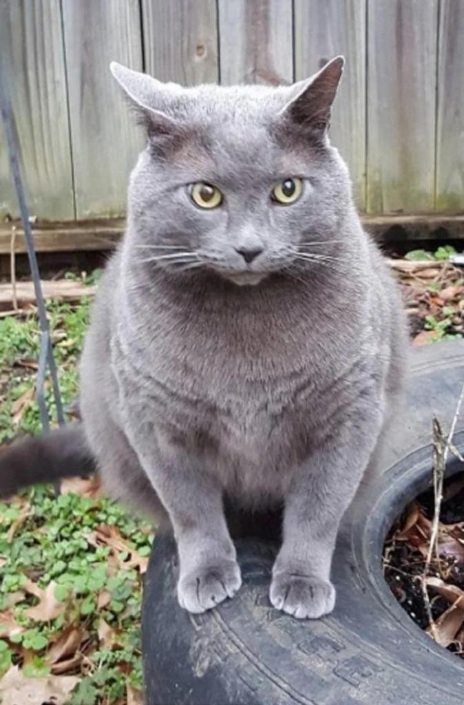 Женщина въехала в новый дом, а во дворе ее ждал чей-то кот. Она решила приютить пушистого гостя