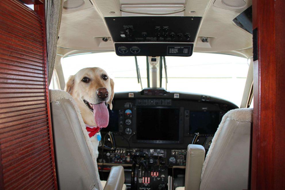 Грегг и Бриа: собака со своим хозяином-пилотом налетала многие тысячи миль в небе