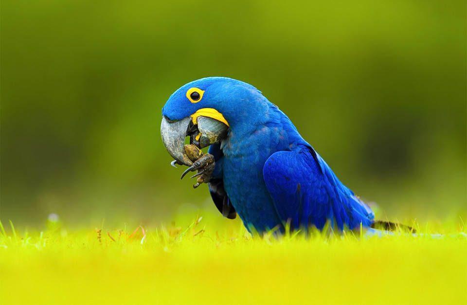 Яйца редкой птицы на черном рынке стоят дороже золота. Как некоторые люди наживаются на исчезающих видах