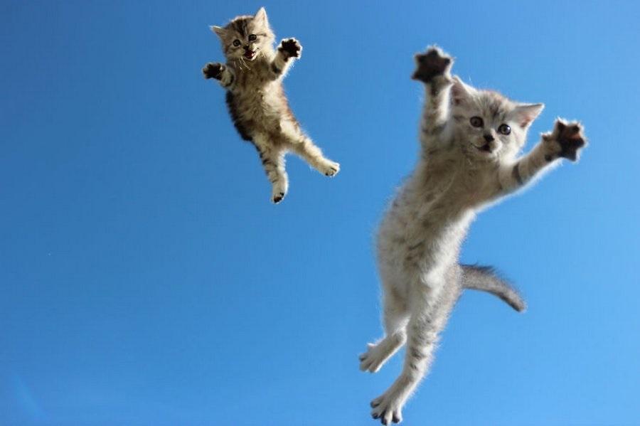 Почему при падении с высоты коты не падают на спину: специалисты объясняют