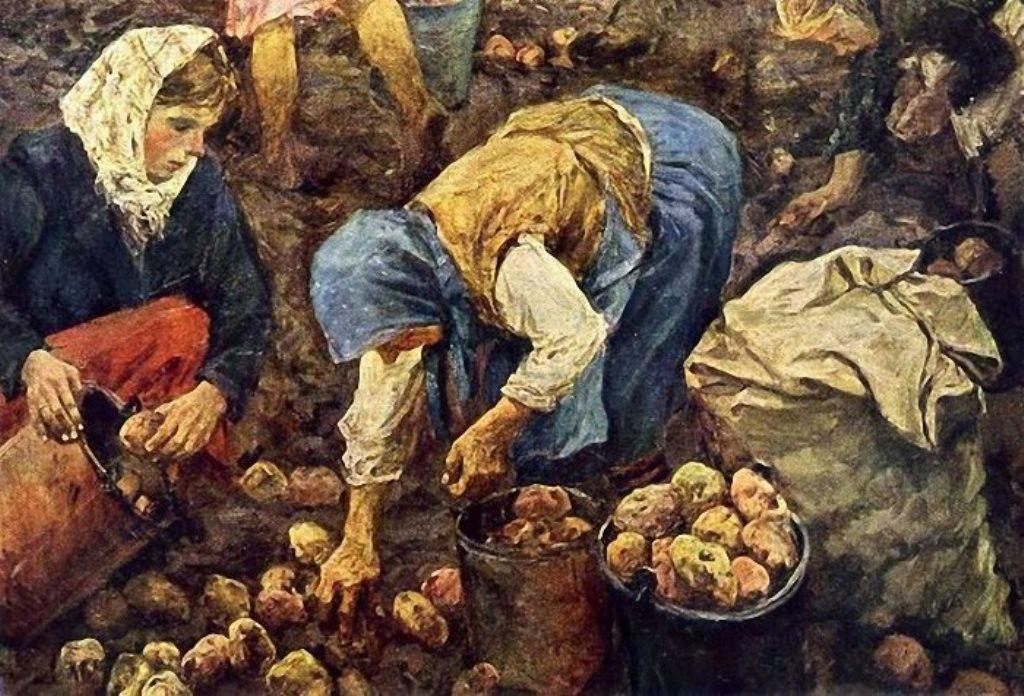 История картофеля картинки