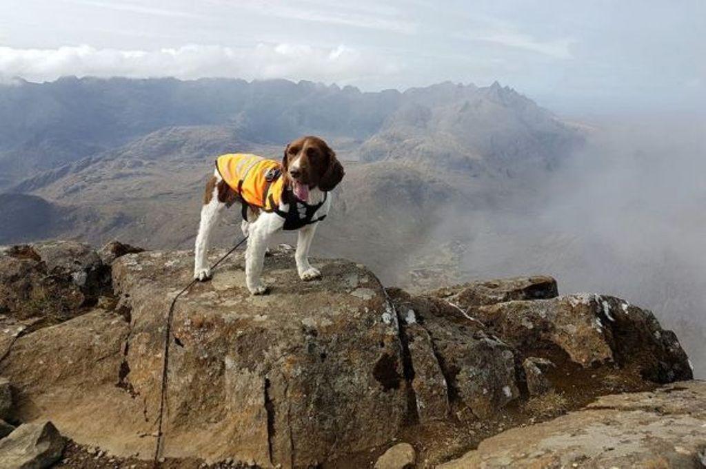 Собака-альпинист. Пес вместе со своим хозяином покорил 268 горных вершин, и это не предел