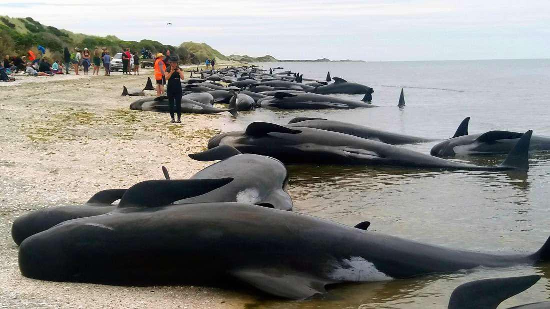 кит выбросился на берег картинка получасового самого главного