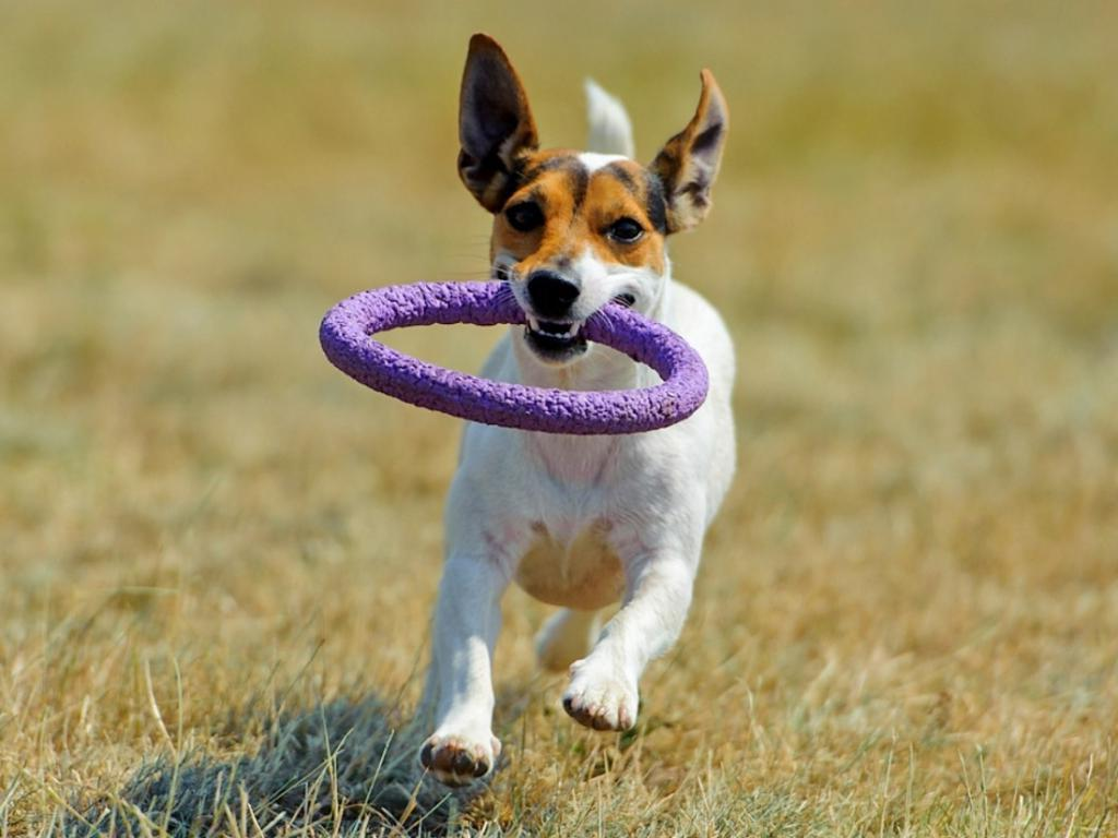 Лайфхаки по дрессировке, которые помогут всем любителям собак воспитать своего питомца