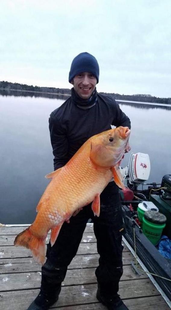"""Мужчина поймал 15-килограммовую """"золотую рыбку"""". Оказалось, рыбке не менее 100 лет"""