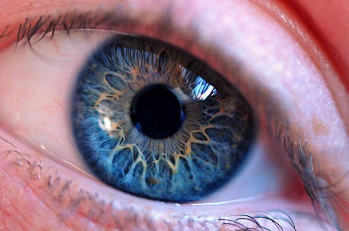 глаз способен воспринимать ультрафиолетовый цвет
