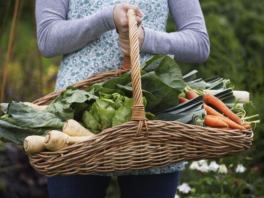 Покупать сезонные продукты или посадить свой огород: 10 советов, как сэкономить на еде и при этом хорошо питаться