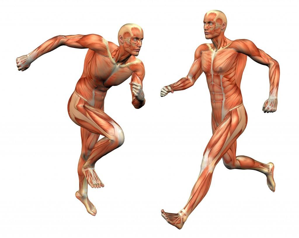 Anatomy of men