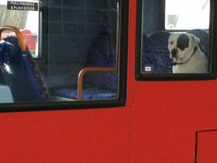 Водитель автобуса уже собирался отправляться на отдых: но тут в зеркале заднего вида он увидел одного четырехлапого пассажира
