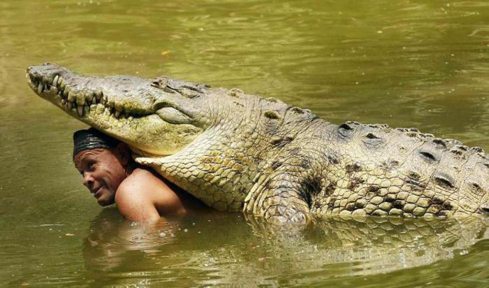 Крокодил Почо