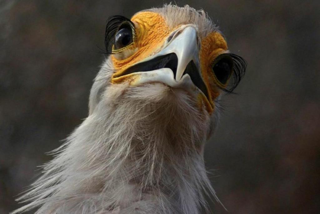 рюо птица с ресницами фото составами
