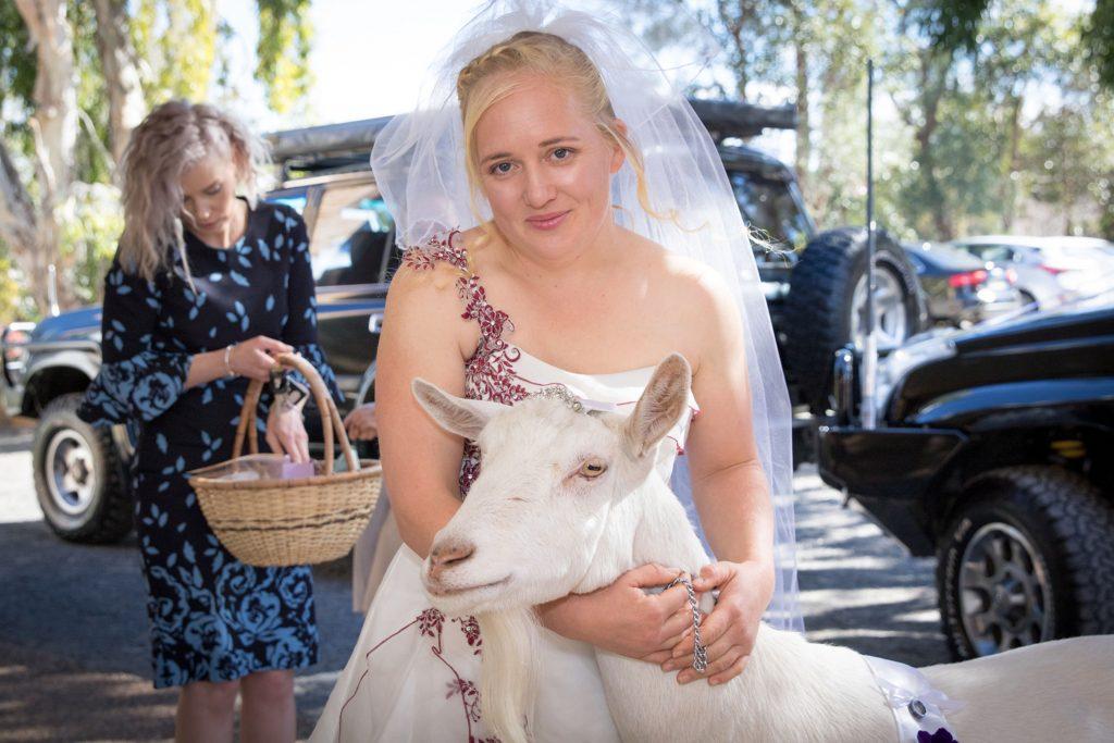 район картинки коза свадьба постройки хот-рода