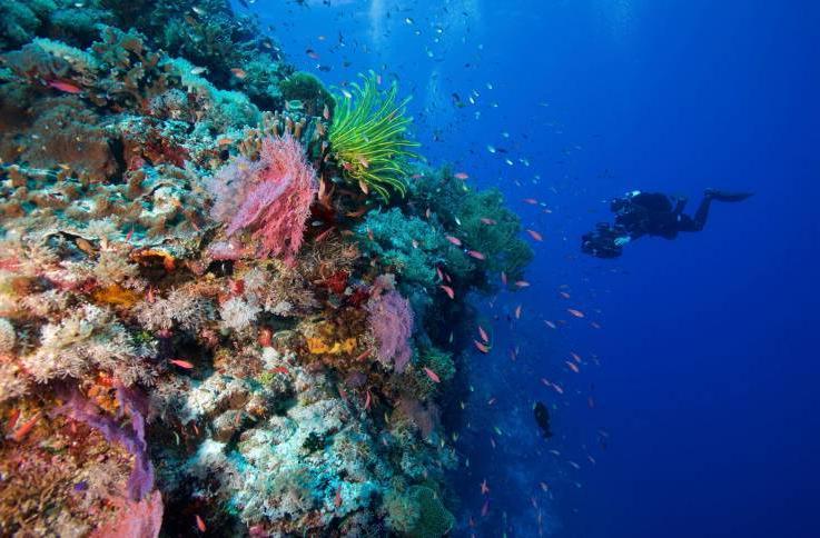 Если дайвинг - ваша страсть: путешественница Кристин Хеттерман предлагает личный список мест на планете для наслаждения подводным царством и делится своим опытом