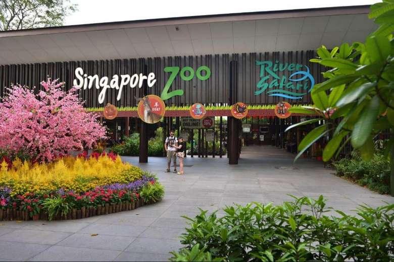 Женщину разыграли в зоопарке Сингапура на шоу змей: ее реакция облетела интернет (видео)