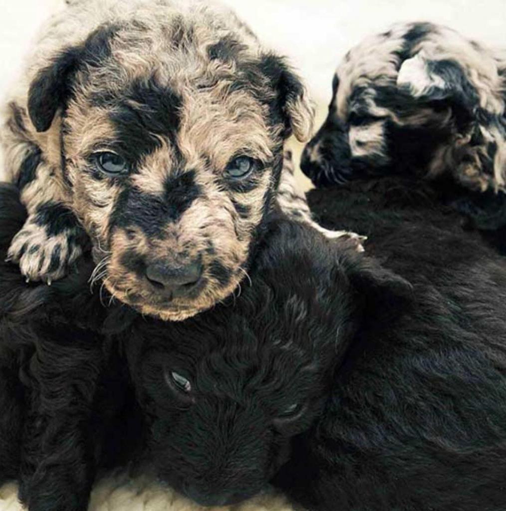 Необычные псы: фотоподборка собак удивительных и редких окрасов