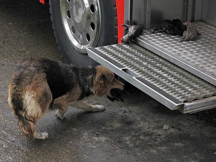 Безграничная любовь матери: собака несколько раз проходила через пылающий огонь, чтобы спасти своих щенков