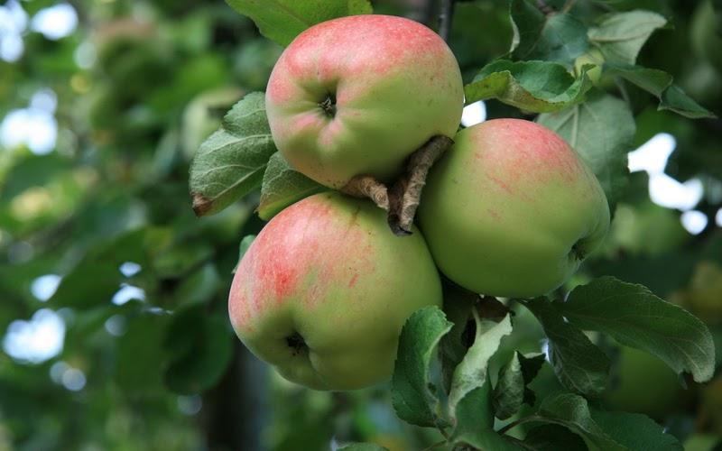 Заряд на весь год: яблочно-огуречный сок и его польза (рецепт)