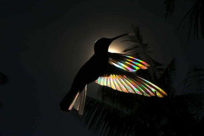 Радужные колибри в необычной серии фоторабот от бразильского художника