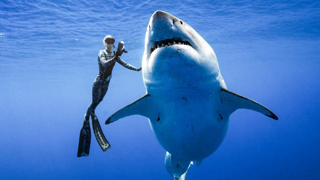 8 животных, которые более опасны, чем акулы