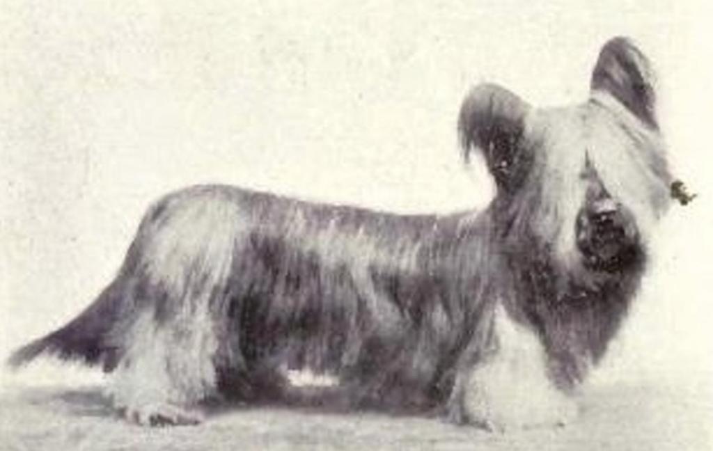 Как изменились собаки за столетия? Сравнение разных пород питомцев тогда и сейчас (фото)