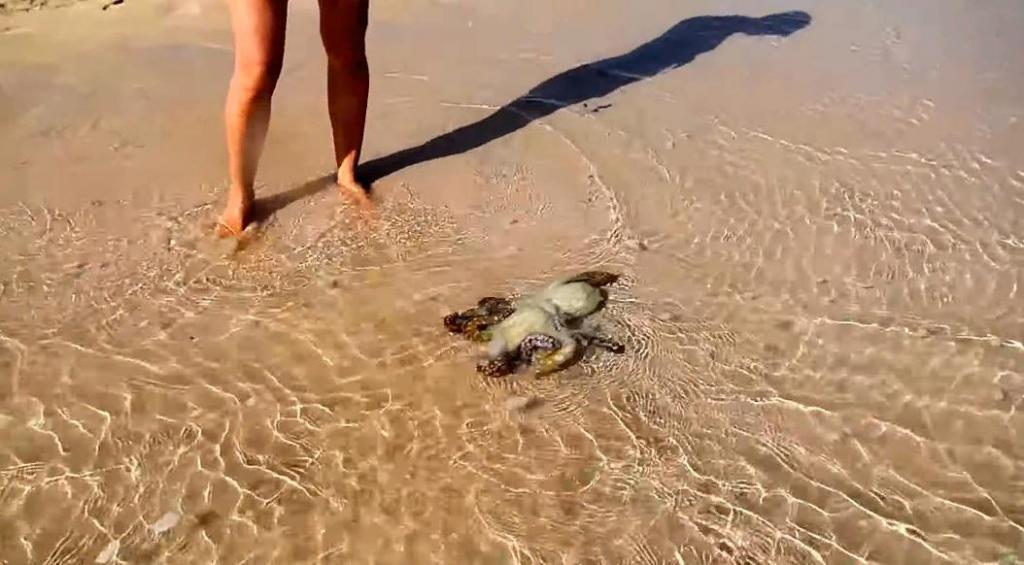 Семья спасла осьминога на пляже. На следующий день он вернулся, чтобы отблагодарить их