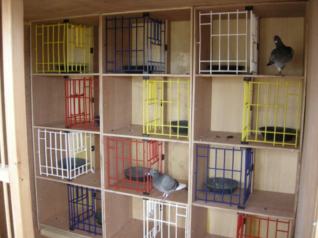 Гнезда для голубей картинки