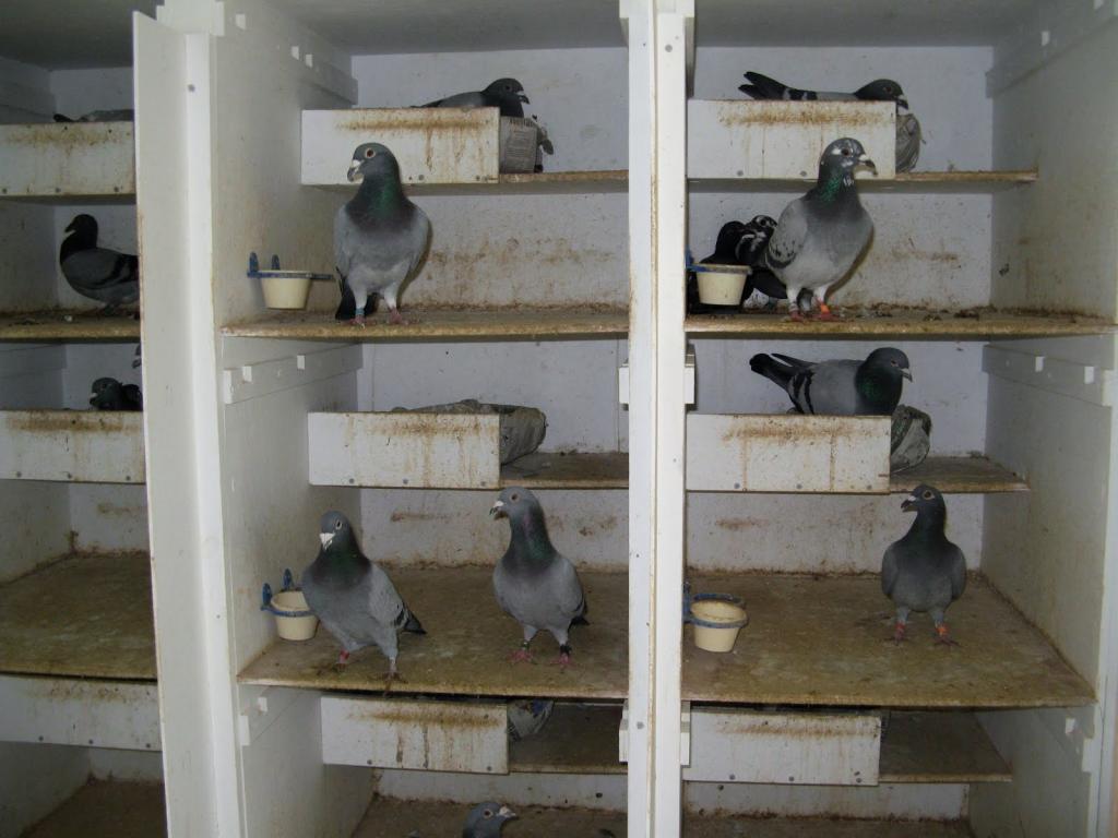 устал жить гнездовые ящики для голубей фото часто