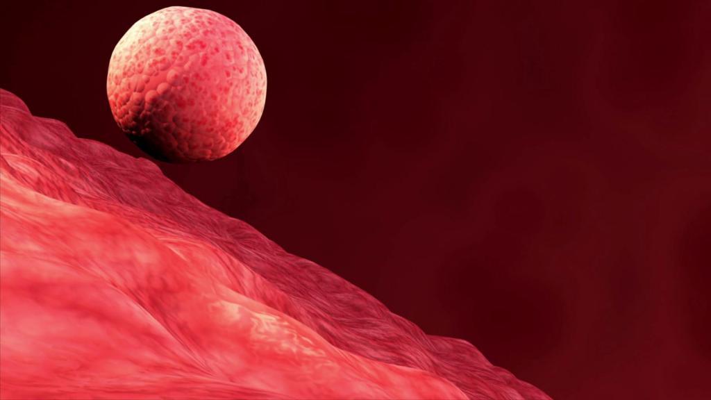 С какой стороны прикрепляется эмбрион 29