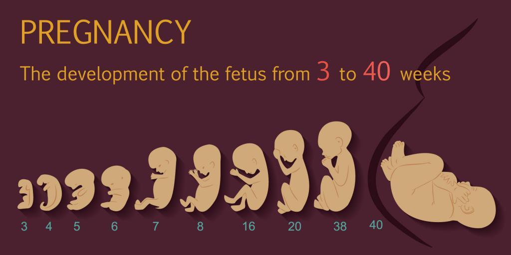 23 День цикла выделения при беременности 16