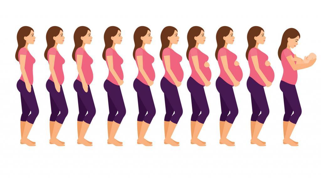 23 День цикла выделения при беременности 19